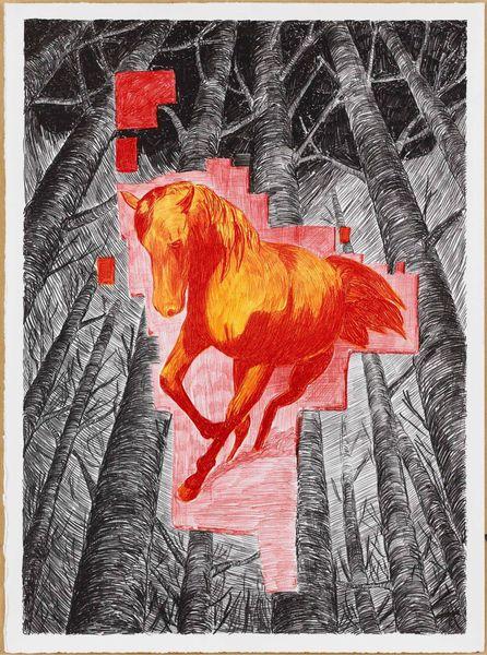 Equus ferus caballus (horse)