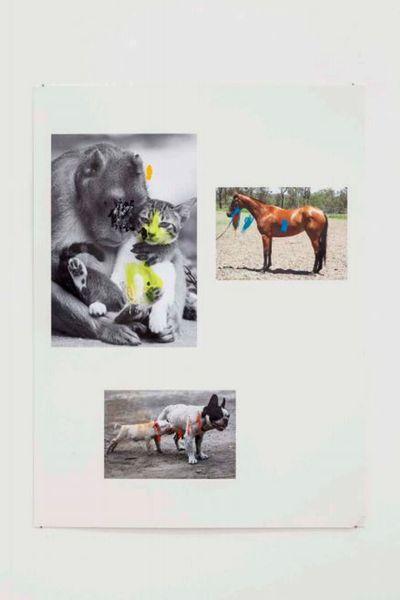Monkey / Cat / Horse