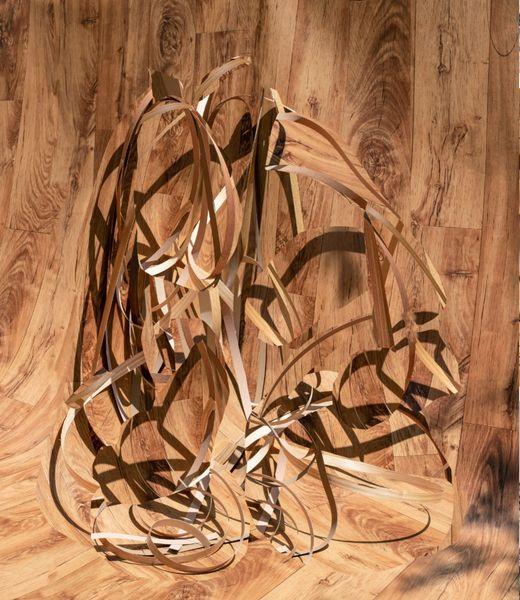 Veneer Wood Wood by Nico Krijno, Elizabeth Houston Gallery