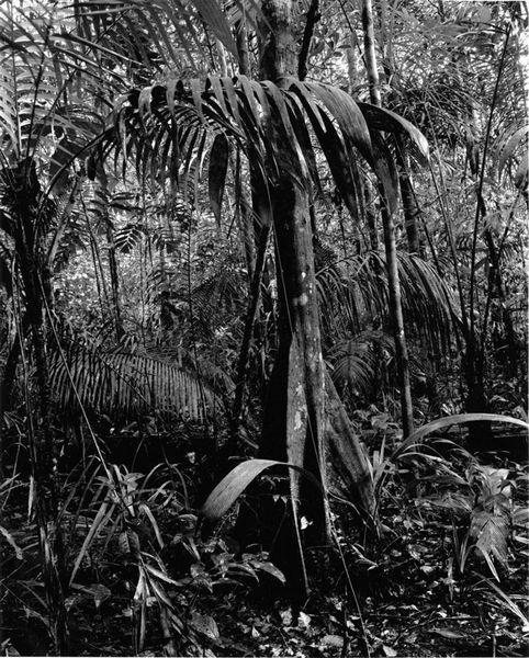 Rio Negro 040, 2002 by Balthasar Burkhard, Hammer Consulting